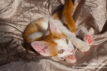 Photographe animalier Paris, chats et animaux de compagnie